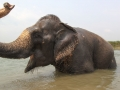 Chitwan-National-Park-4.jpg